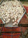 Qualità eccellente dell'aglio