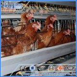 Cage de cailles de couche de matériel de Chambre pour la ferme avicole