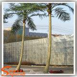 정원 훈장을%s 인공적인 코코넛나무