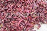 Baccelli secchi della paprica con o senza il gambo