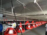 Casa de galinha clara pré-fabricada da construção de aço com equipamento (KXD-SSC1501)