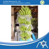 Agriculture Fruit CoverのためのPP Nonwoven Fabric