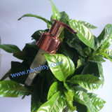 Heißer Verkaufs-neueste Bambussahnelotion-Pumpe