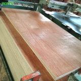 Madera contrachapada comercial de madera dura material de la decoración de los muebles con la chapa de Bintangor