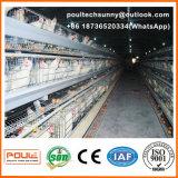高品質の層のための自動鶏のケージの家禽装置