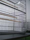 Birdcage клетки любимчика клетки полета ковки чугуна продуктов любимчика Hendryx предваротельного просмотра