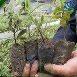 Non-Wovenファブリックプラント実生植物はDegradable繁殖袋を袋に入れる