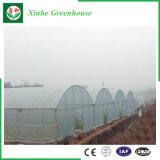Agriculture de la serre chaude en plastique pour des légumes/fleurs