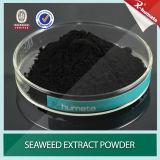 Polvere dell'estratto dell'alga delle alghe brune