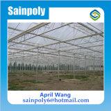 Invernadero de policarbonato caliente de la venta por Growing System