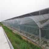 De Serre van de Plastic Film van de Tunnel van lage Kosten voor Tomaat