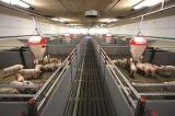 Производство оборудования Пятачок мини-ящик Pig мини Weaner пера пера