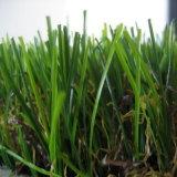 庭のための国際的な証明された草