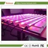 LED lámpara Keisue creciente con el aparejo de iluminación