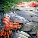 Chambre froide, entreposage au froid, surgélateur pour des poissons, viande, champignon de couche