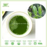 100% reiner natürlicher sofortiger pulverisierter grüner Tee Matcha