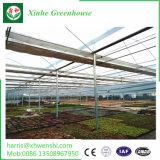 Venda a quente com efeito de Vidro tipo Venlo para flores e produtos hortícolas crescendo