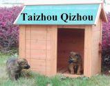 Chambre de chien (QZD8049)