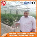 Сельское хозяйство Multi Span Гидропоника листов из поликарбоната выбросов парниковых газов для выращивания овощей растет
