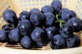 Extracto de grosella negra con antocianidina para el suplemento alimenticio