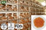 Reishi Espora Softgel aceite para el alto grado de