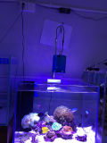 Venta al por mayor Iluminación producto patentado acuario LED
