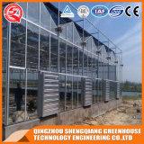 Landwirtschafts-Stahlrahmen PC Blatt-Gewächshaus mit Kontrollsystem