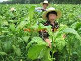 Fertilizante orgánico contento del polvo el 52% del aminoácido