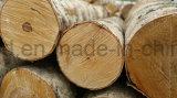 Madera contrachapada acústica de la nueva de la salida madera contrachapada rápida del abedul