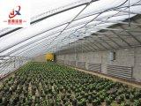 Парник полиэтиленовой пленки для засаживать зеленых цветов