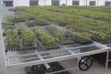 Moderne Landwirtschaft, die beweglichen Rooling Prüftisch-GewächshausSeedbed pflanzt