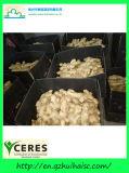 Высушите на воздухе имбиря из Китая 150G/200G/250g свежего имбиря