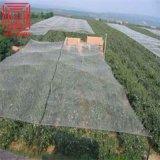 بركة تغطية حبّة برد حارس شبكة زراعة بلاستيكيّة شبكة أمان مضادّة عصفور تشكيك
