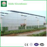 농업을%s 야채 또는 정원 또는 꽃 또는 농장 플레스틱 필름 녹색 집