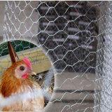 Il PVC ha ricoperto e tuffato il reticolato esagonale galvanizzato/rete metallica poco costosa galvanizzata del pollo