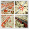 Steel Structure Poultry House with Full Set Poultry Equipment