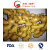 Golden Supplier New Crop Fresh Ginger (200g and up)