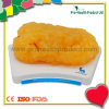 Soft 5lbs TPR Anatomical Fat Model For Teaching