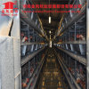 Automatic Hot Galvanization Broiler Chicken Cage (H Type)