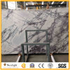 Imported White Marble Wall Tile, Italy White Heaven Bird Marble Slabs