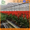 High Quality Cheap Film Agriculture Greenhouse