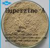 Memory Improvement Galantamine Huperzine a Raw Material