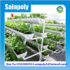 Professional Factory New Design Hydroponic Greenhouse for Vegetable