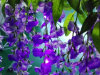LED Artificial Wisteria Curtain Light Icicle String Ceremony Wedding Decoration