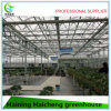 Graden Glass Tropical Greenhouse for Agriculture Flower House