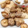 Light Weight Tea Flower Shiitake Mushroom