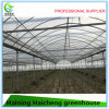 Modern Plastic Greenhouse for Agriculture