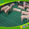 Plastic Slatted Flooring for Goat Sheep Dairy Poultry Farms