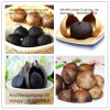 Single Solo Black Garlic