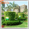Guangzhou Supplier Landscaping Decorative Topiary Plant Grass